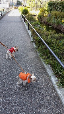 s緑道お散歩 (1).jpg